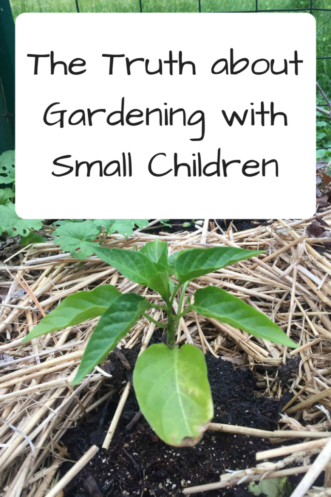 The Truth about Gardening with Kids and Children - yes, all of these things will happen! (Photo: Pepper plant in garden surrounded by straw)